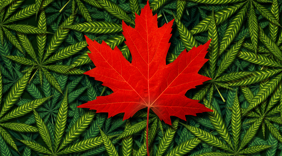 COSA-Canada-Cannabis